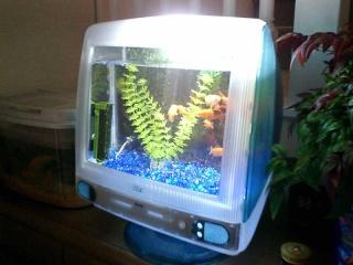 Recycler son Mac ^^ Aquari10