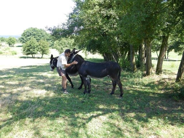(dpt 71) A ADOPTER, MILAN et ZADIG, ânes communs, en famille d'accueil chez Charly71 Imgp0028