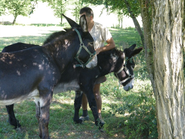 (dpt 71) A ADOPTER, MILAN et ZADIG, ânes communs, en famille d'accueil chez Charly71 Imgp0030