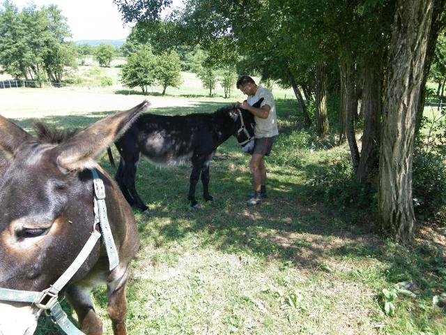 (dpt 71) A ADOPTER, MILAN et ZADIG, ânes communs, en famille d'accueil chez Charly71 Imgp0032