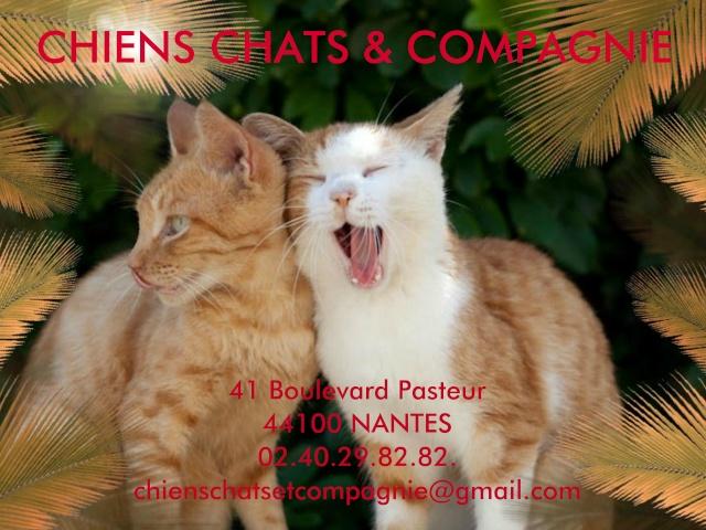 CHIENS CHATS & COMPAGNIE - Association de Protection Animale sur Nantes et sa Région