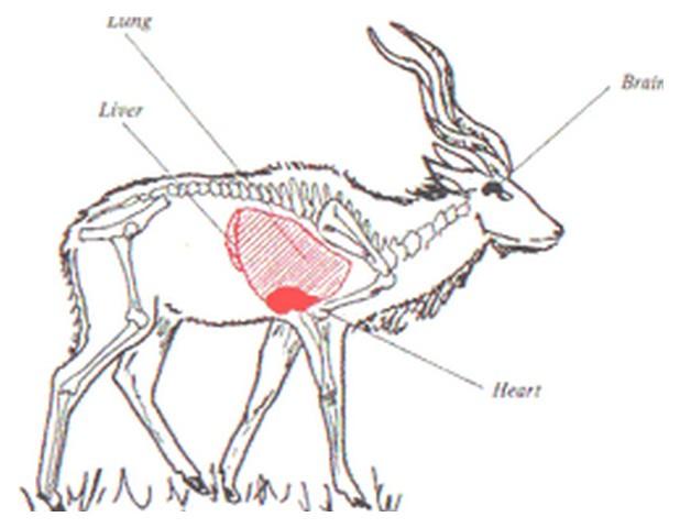 chasse et techniques 3éme partie Image019