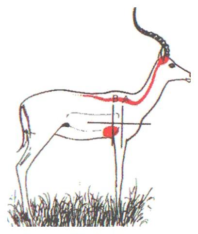 chasse et techniques 3éme partie Image020