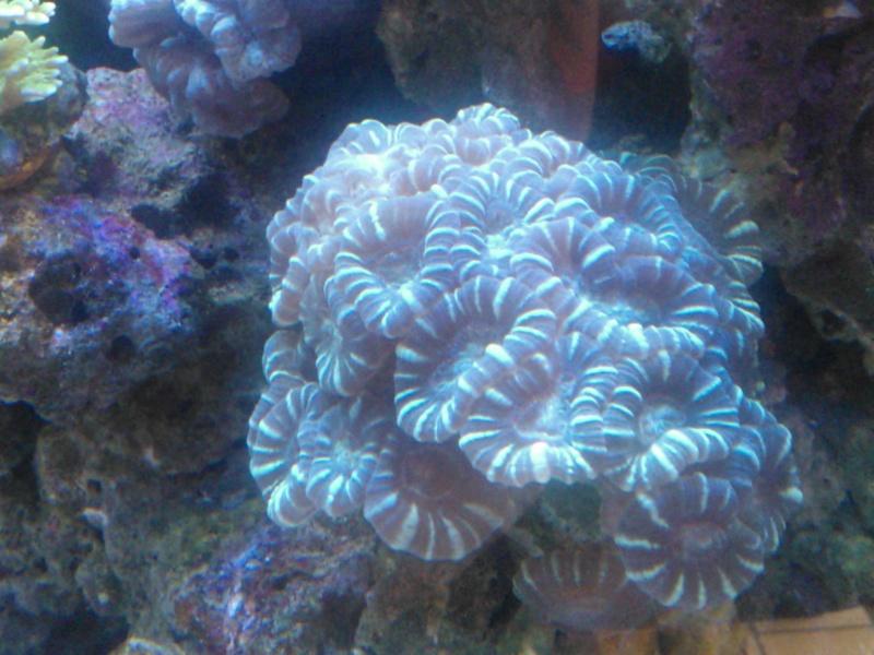 coraux mal ouvert Wp_00023