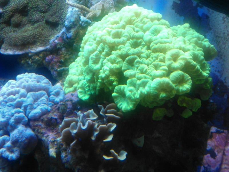 coraux mal ouvert Wp_00024