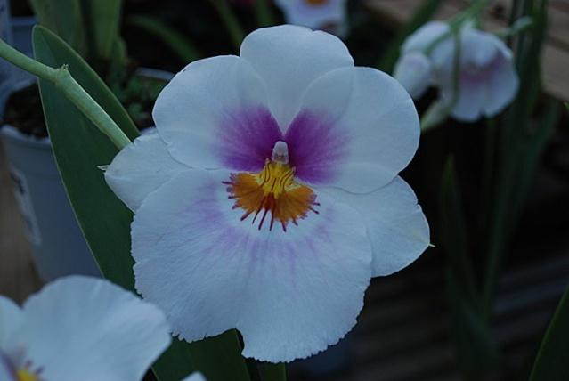 orchidées chez Boun 1212