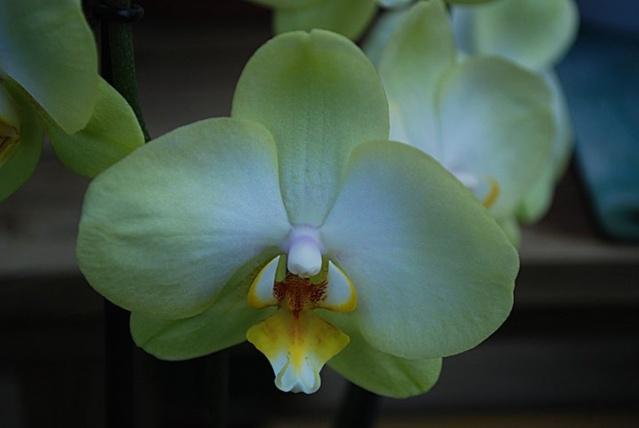 orchidées chez Boun 1412
