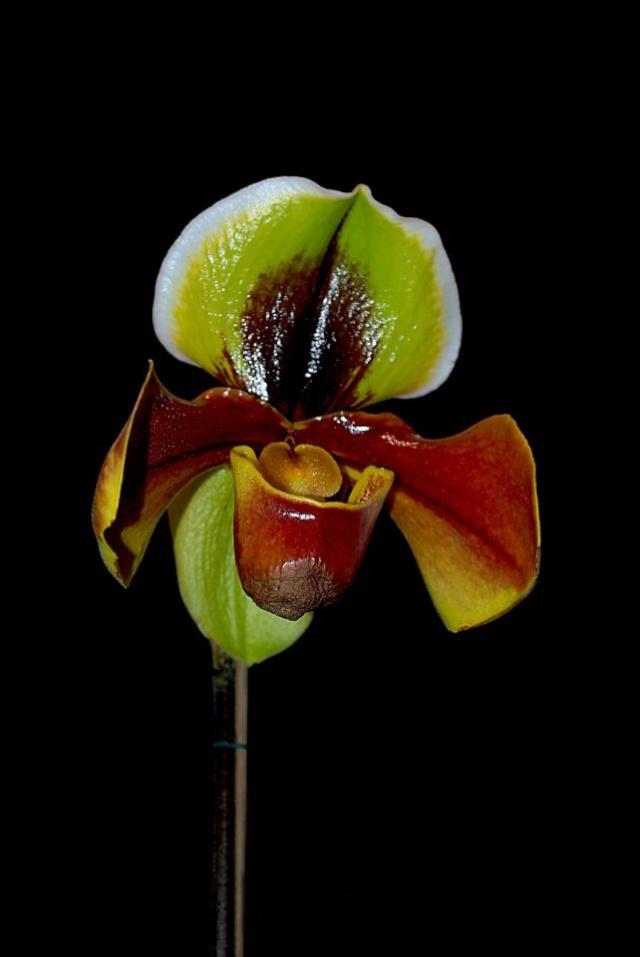 orchidées chez Boun 2810