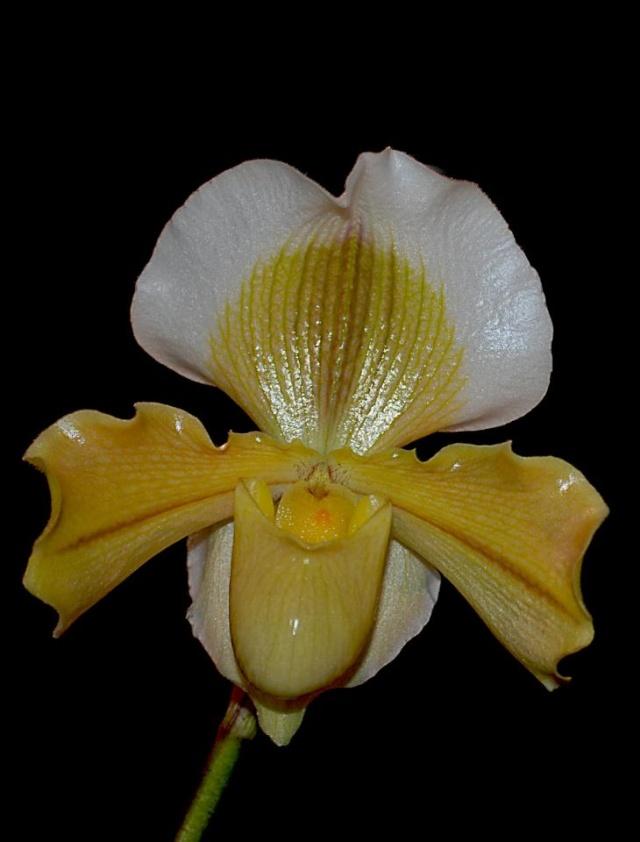 orchidées chez Boun 2911