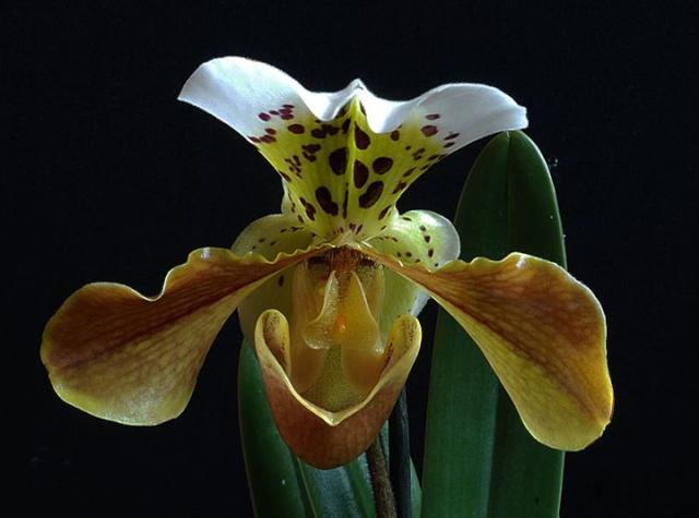 orchidées chez Boun 3012