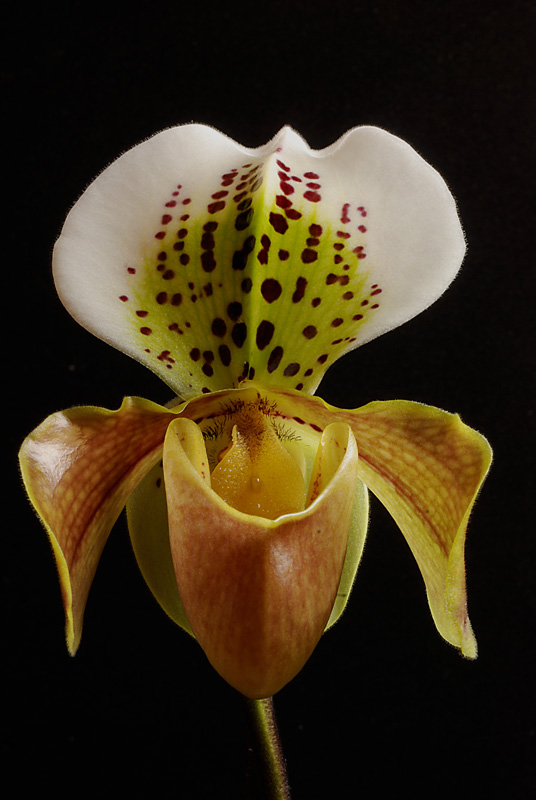 orchidées chez Boun 3211