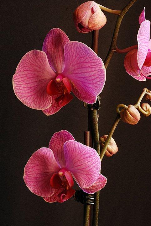 orchidées chez Boun 811