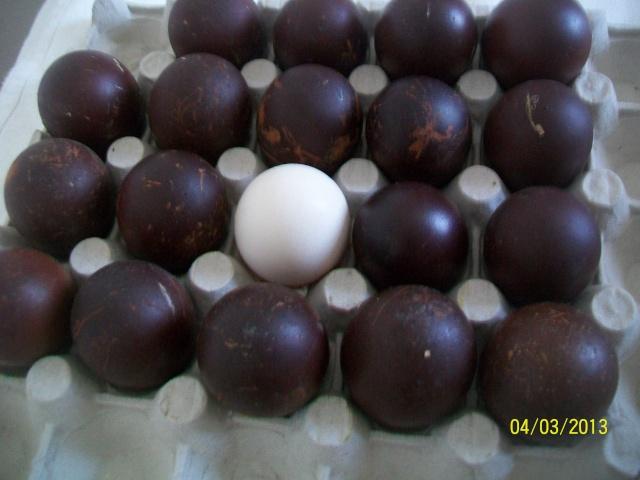 marans - L'œuf de la Marans 100_3812
