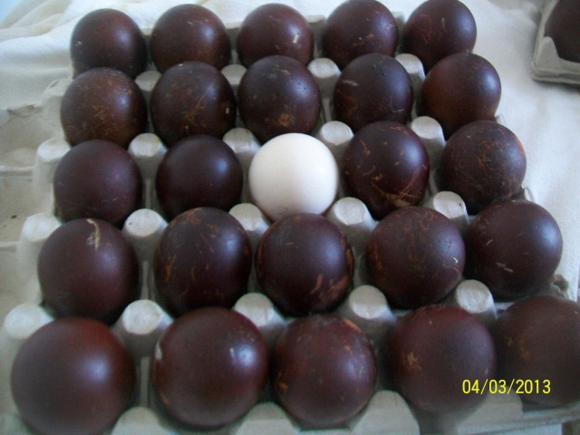 œufs fécondés de Marans… attention à ce que vous trouvez sur lbc 100_3814