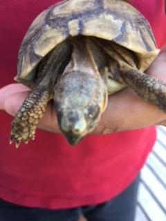 taches blanches sur la tête de ma tortue Img_2512