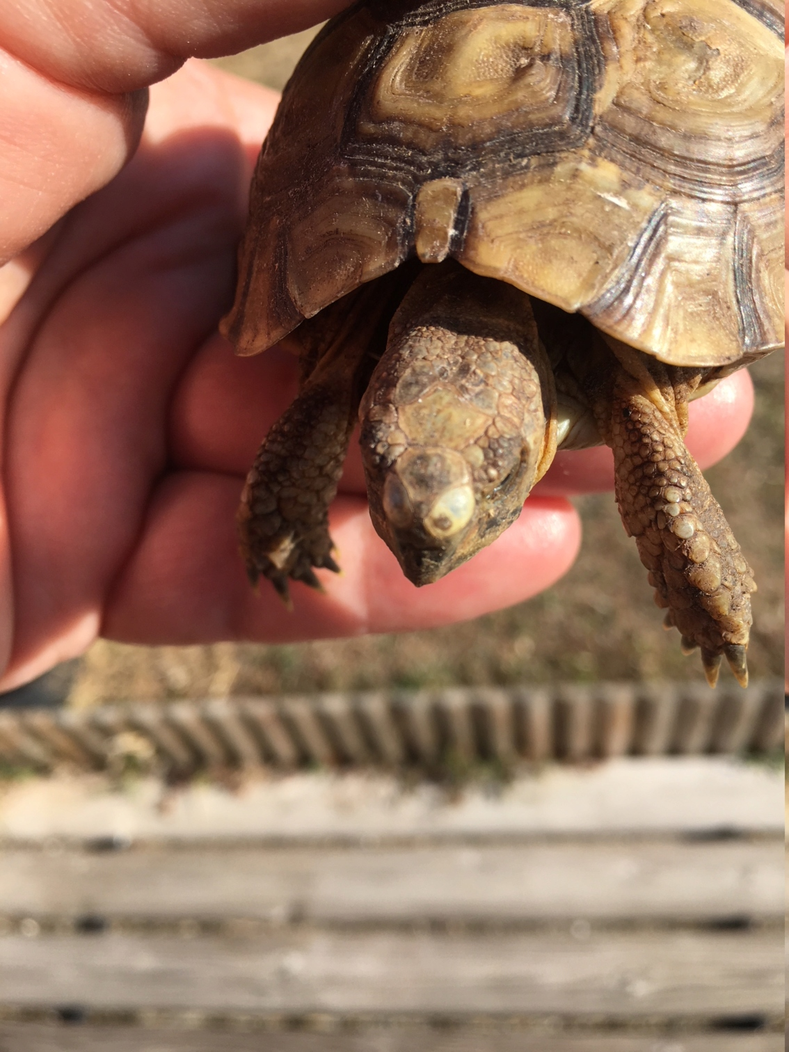 taches blanches sur la tête de ma tortue Img_2515