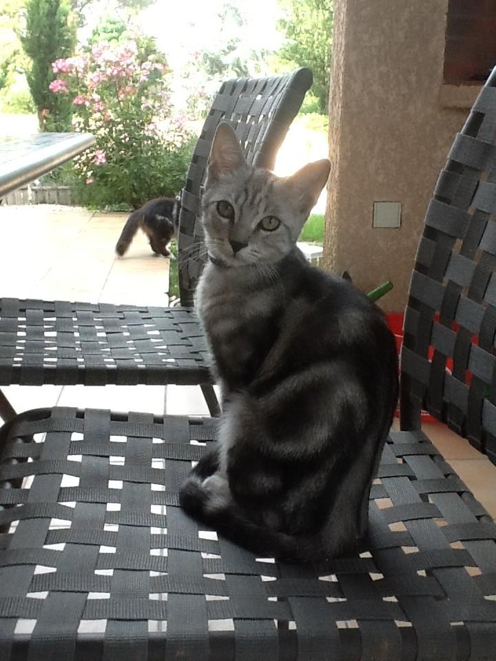 Trouvé chaton 4/5 mois tigré gris à Colomiers Photo10