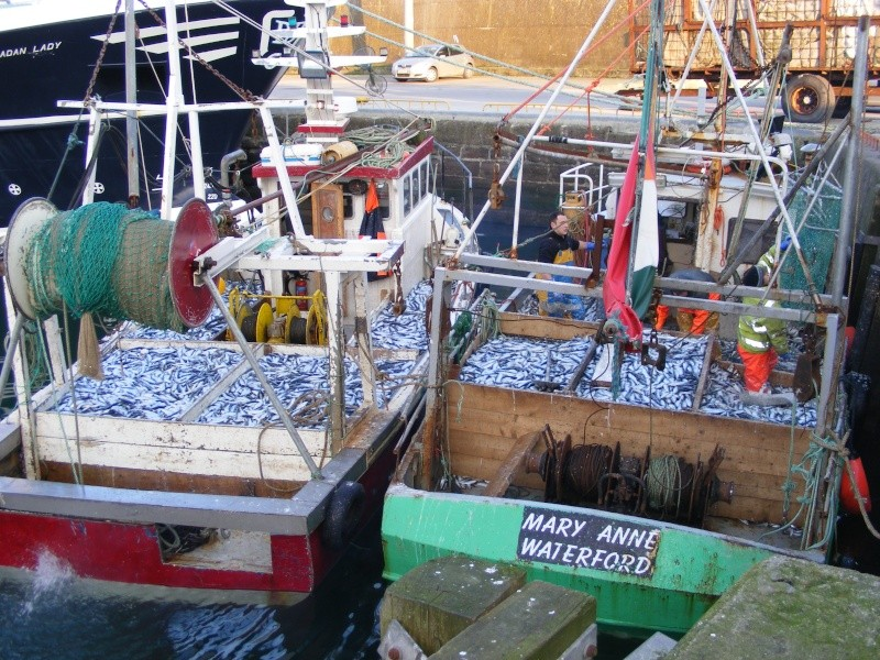 Looks like a great year for herring boats off loading in Dunmore on Sun. Dscf1710