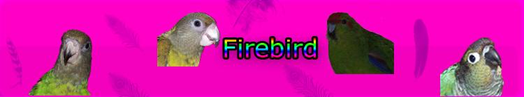 Signature? Firebi12
