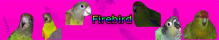 Signature? Firebi13