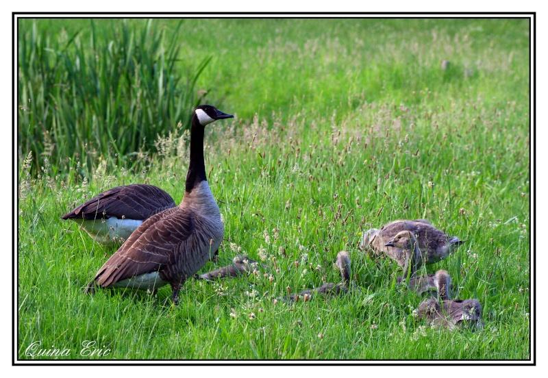 Les canards Imgp3110