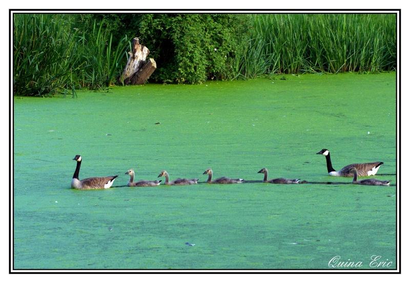 Les canards Imgp3210
