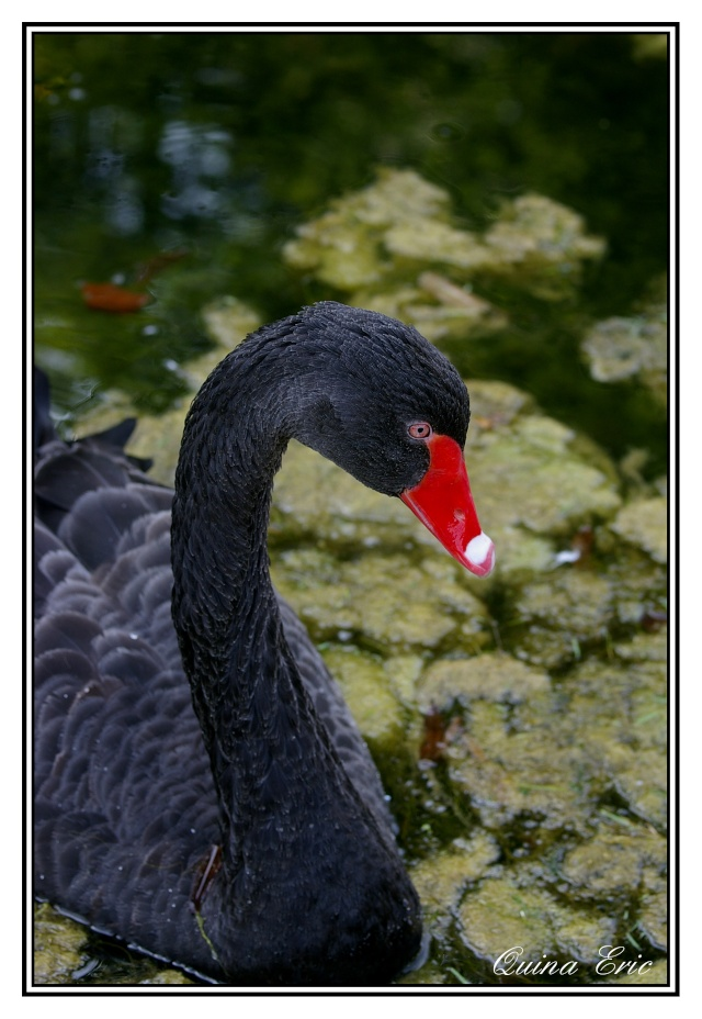 Les canards Imgp6910