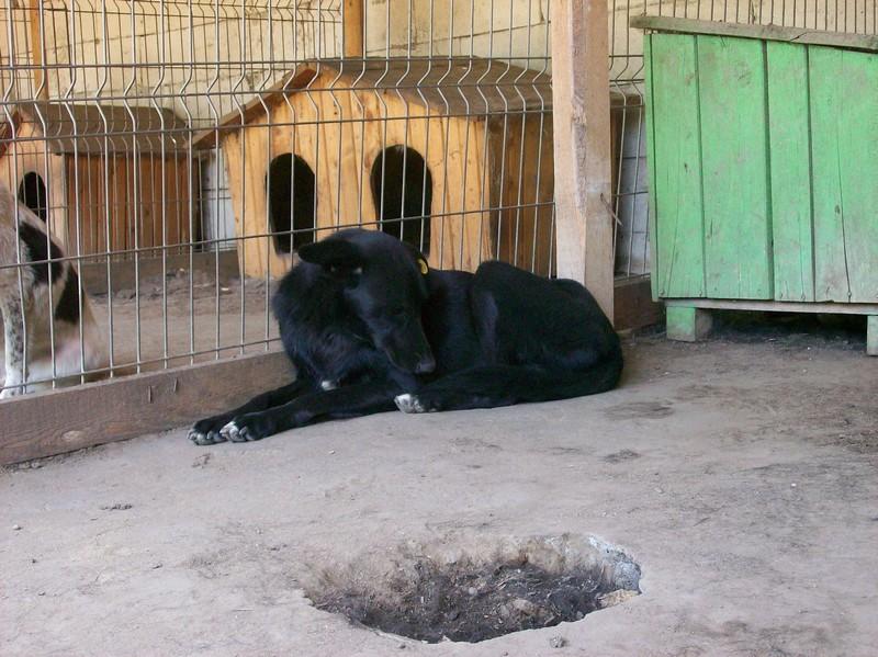 HOPE, née en 2008, croisé labrador parrainée par Nathalie Gamblin- R - VV-SC-SOS-FB - LBC - 107_0834