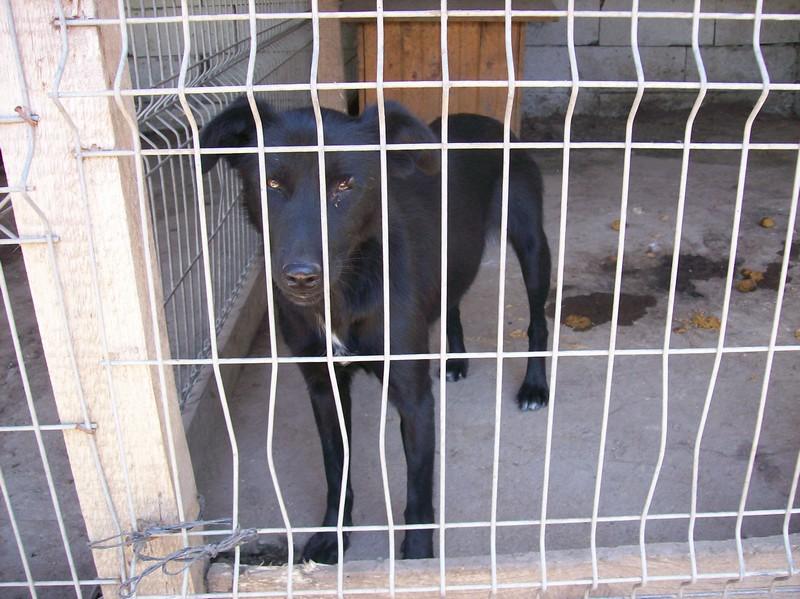 HOPE, née en 2008, croisé labrador parrainée par Nathalie Gamblin- R - VV-SC-SOS-FB - LBC - 107_0835
