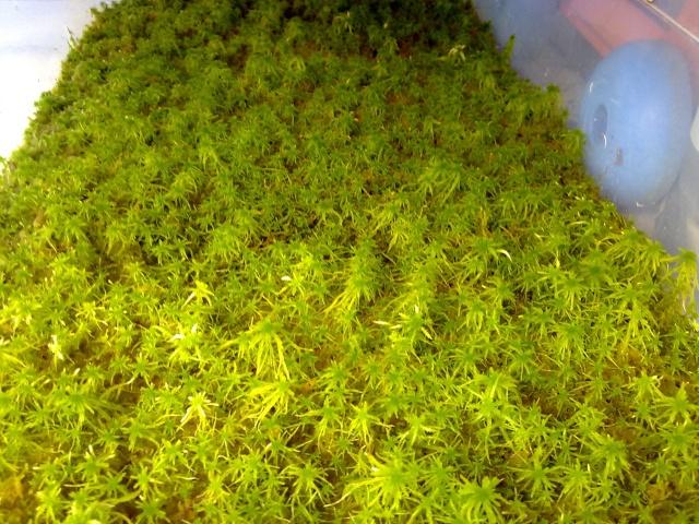 [Vermisso]-Mes plantes - Page 29 13082010
