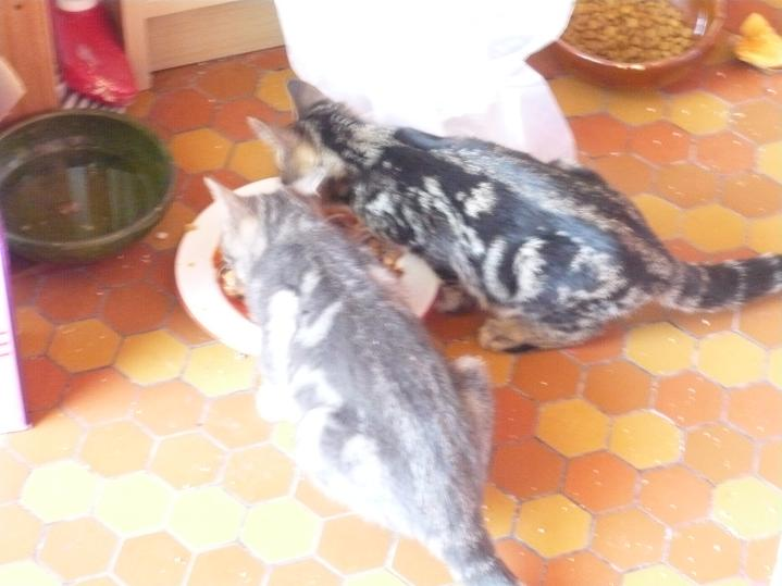 Fogata et Gavroche (anciennement Enzo), 11 mois Fogata12