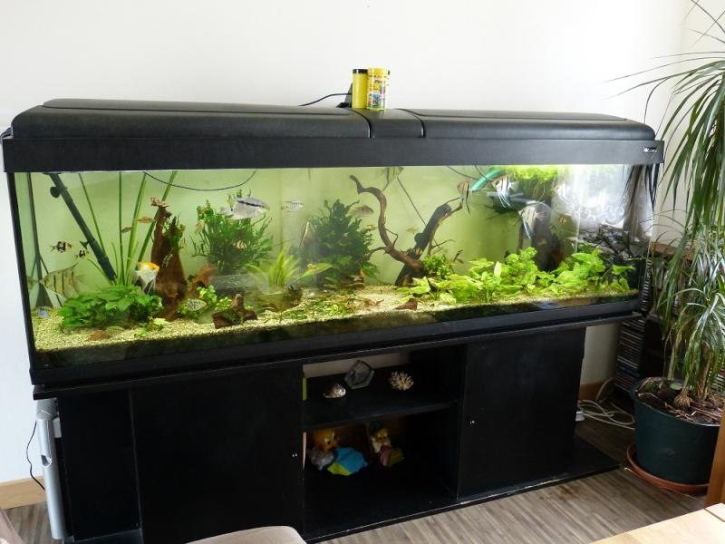 ma fishroom P1010710