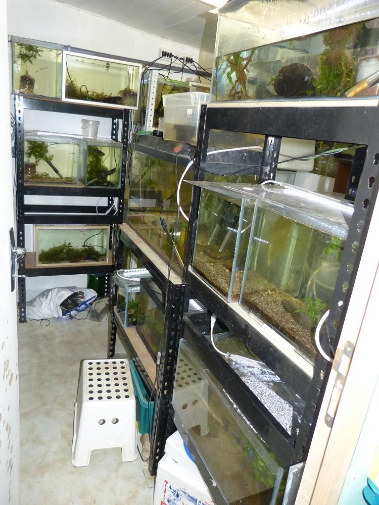ma fishroom P1010910