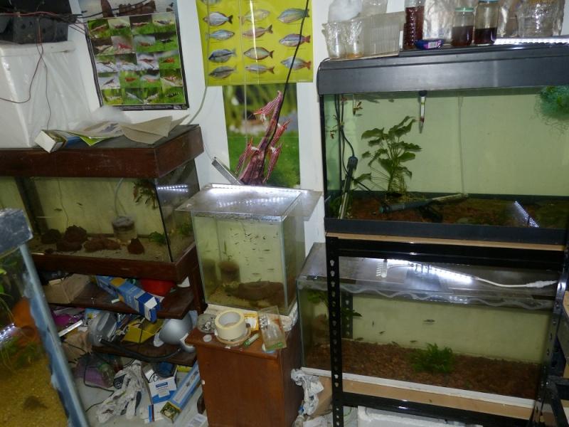 ma fishroom P1010911