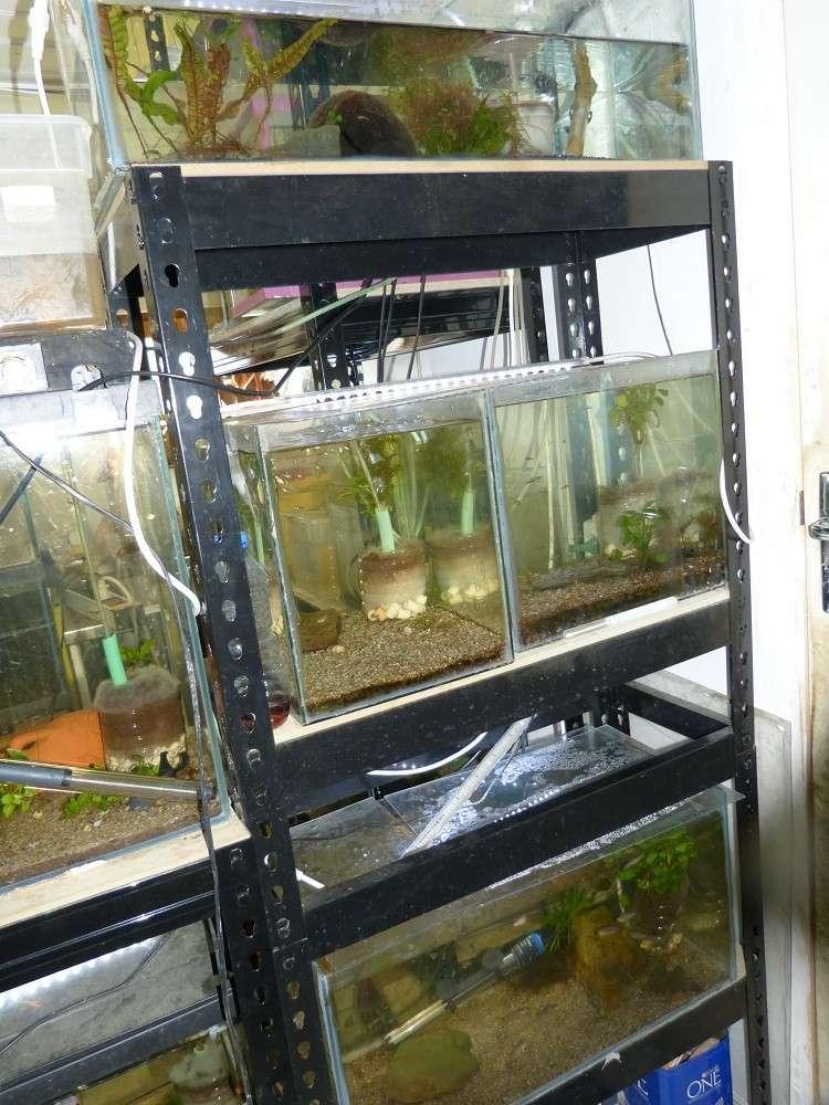 ma fishroom P1010912