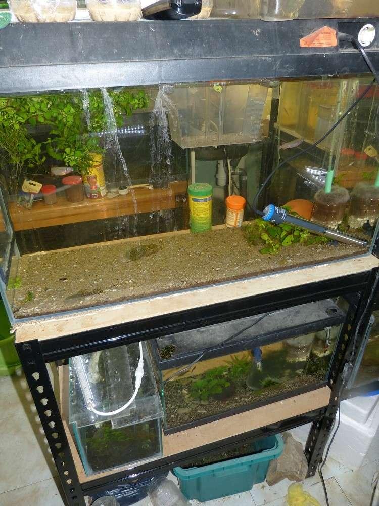 ma fishroom P1010913