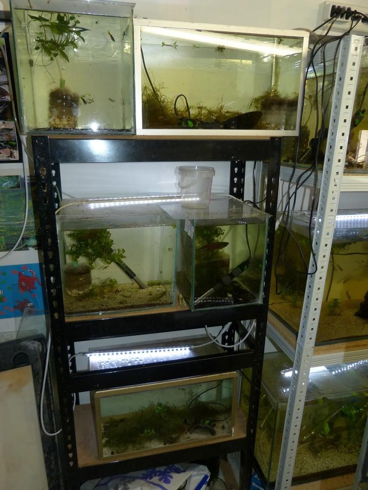 ma fishroom P1010914