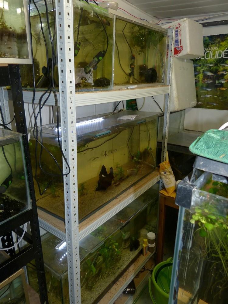 ma fishroom P1010915