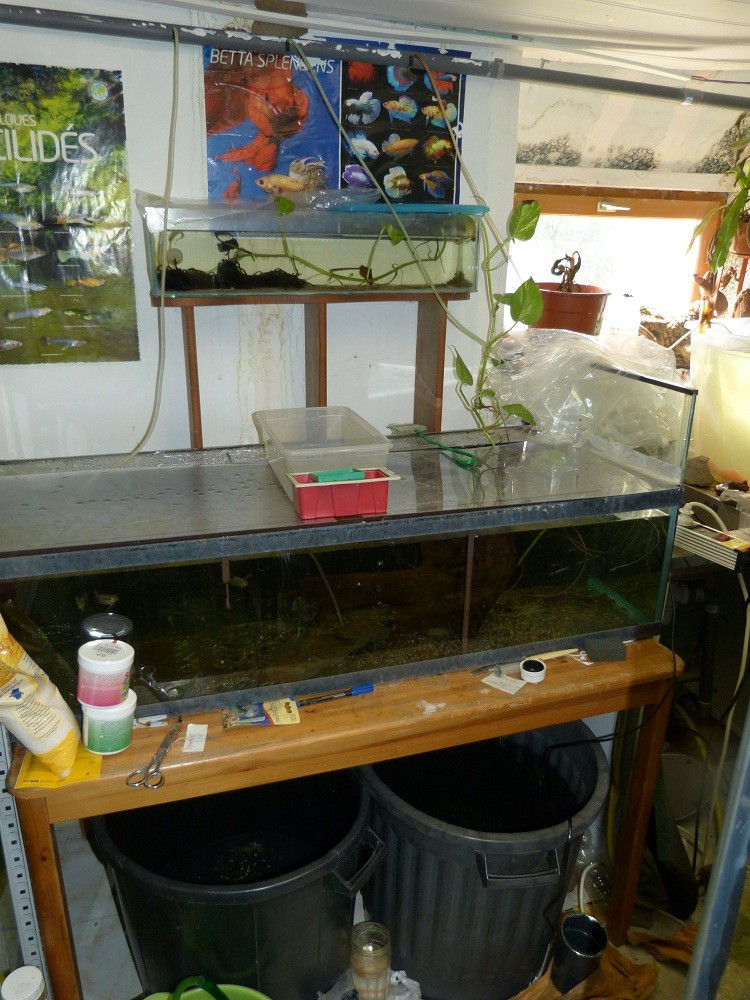 ma fishroom P1010916