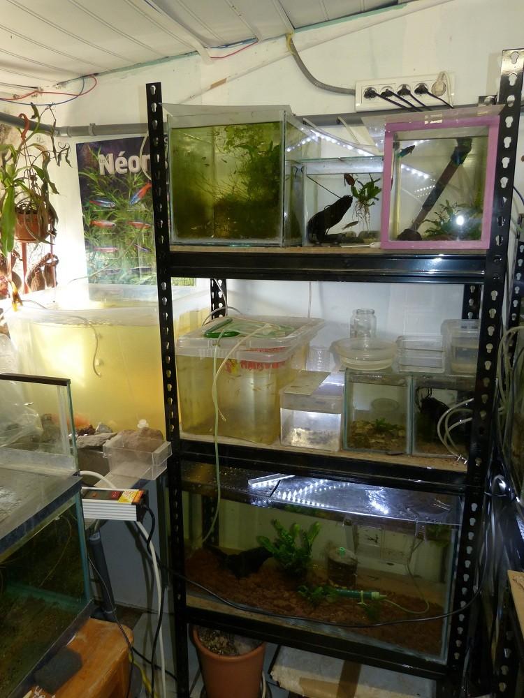 ma fishroom P1010917