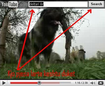 Deltari Ilir (Qeni i Sharrit) Racë Autoktone Untitl11