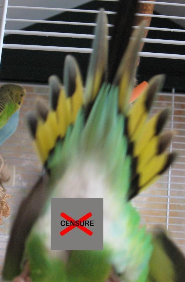 Ondulite aïgue! lolo contaminé !!! - Page 2 Cul_0010