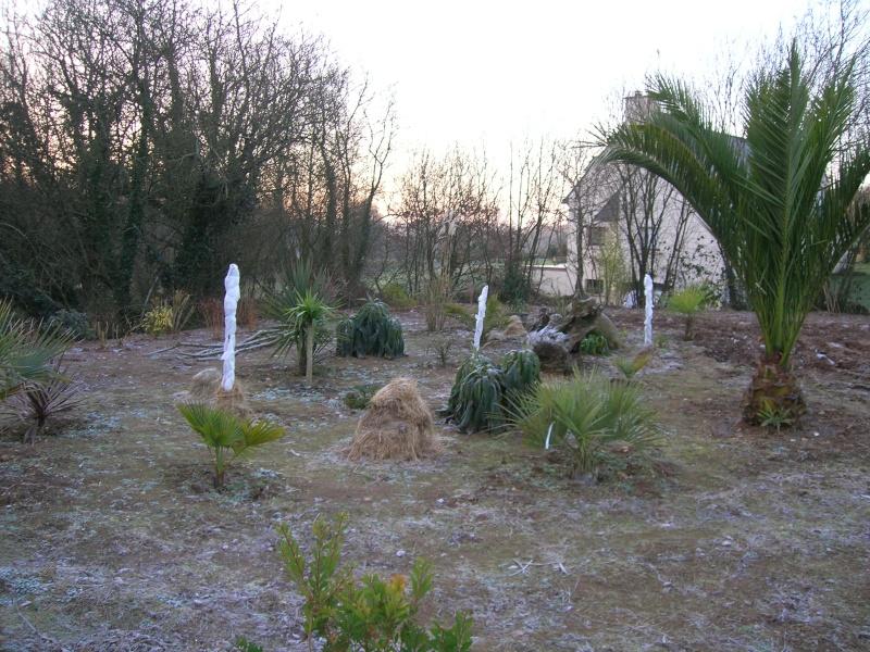 Un hiver + froid dans le Finistère. Dscn1342