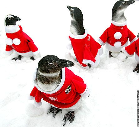 Holiday Penguins 2135_110