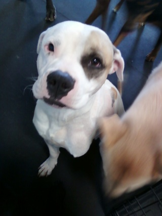 Drake is looking for a new home Drake210