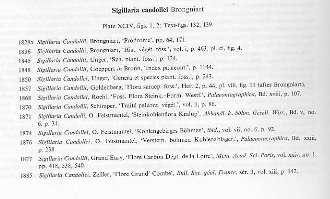 Sigillaria Brongniart ,1822. Syringodendron Sternberg,1820.  - Page 3 File1913