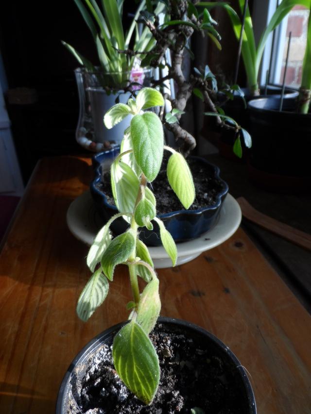qui peux identifier cette plante ??? Sam_0012