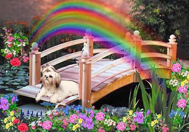 Waiting at Rainbow Bridge Rainbo10