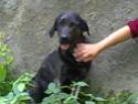 michelle ya ha visto al perro y tiene fotos yujuuuuuuuuuuuuu 19-10-11