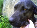 michelle ya ha visto al perro y tiene fotos yujuuuuuuuuuuuuu Perro10